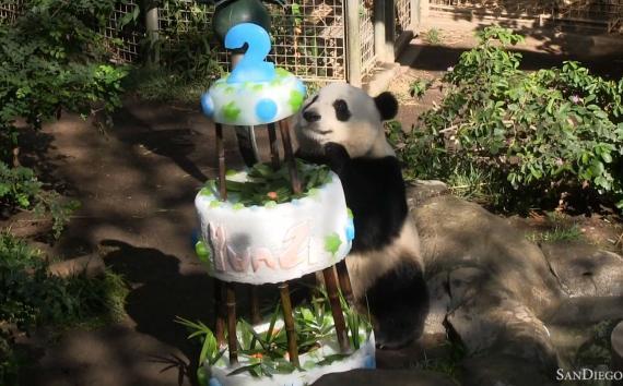 Phenomenal Panda Celebrates His 2Nd Birthday With An Ice Birthday Cake Funny Birthday Cards Online Kookostrdamsfinfo