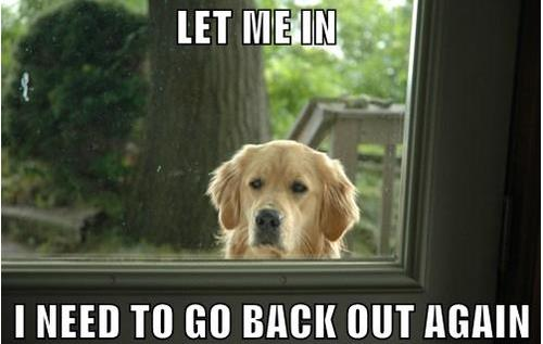 Golden retriever staring into window. Text: Let me in, I need to go back out again.